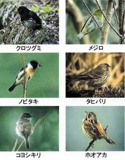 さまざまな野鳥